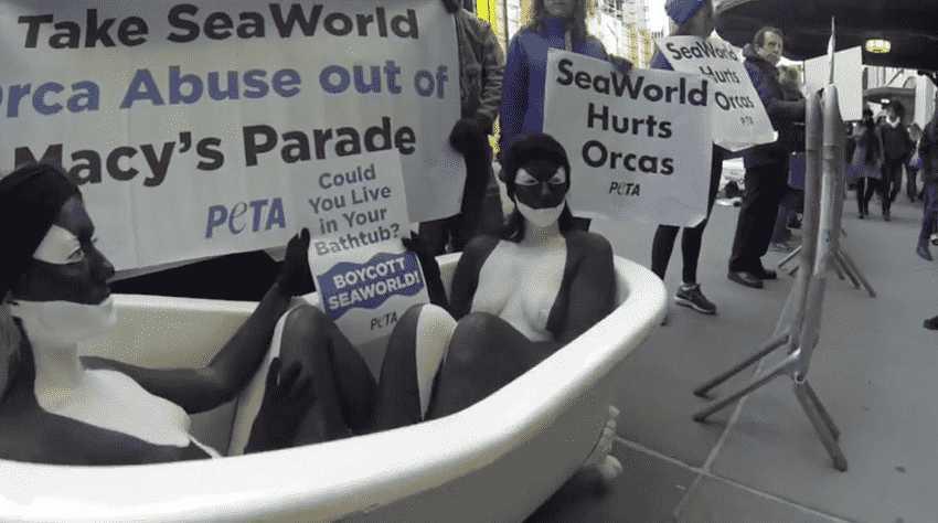 PROTESTORS SAY NO TO SEAWORLD!