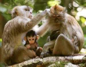 monkeys_velezmitchell_JaneUnChained_primates_Florida_Israel_Mazor_peta_hsus_animals_pets_