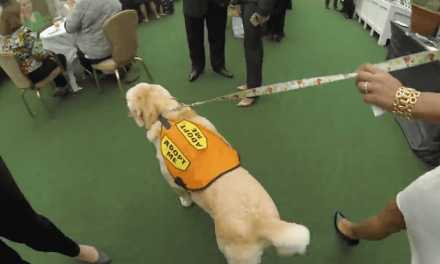DOGS TAKE OVER FAMED WALDORF ASTORIA HOTEL!