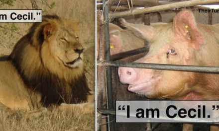 """I am Cecil"" Compassion Campaign Seeks to Stop All Animal Slaughter"