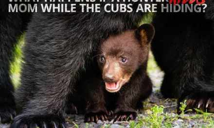 Shaming Florida's Bear Hunters on Social Media is Next Step!