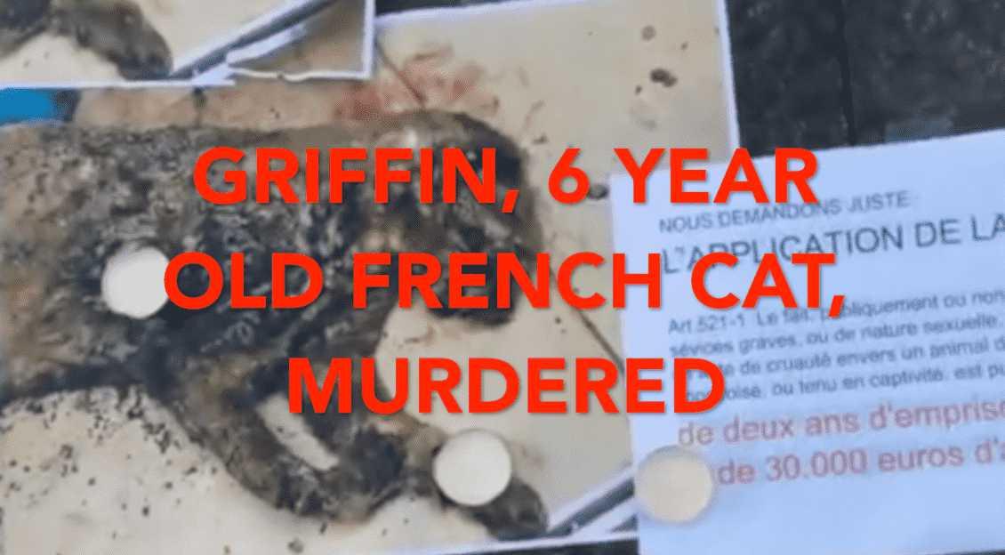 Cat killer rocks France, sparking protests!