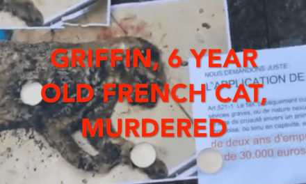 Cat killer rocks France, sparking protests!