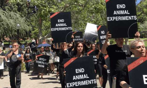 Uproar at UCLA over Animal Experiments!