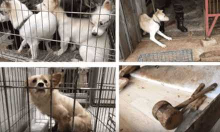 Dog Meat Trade Must End!