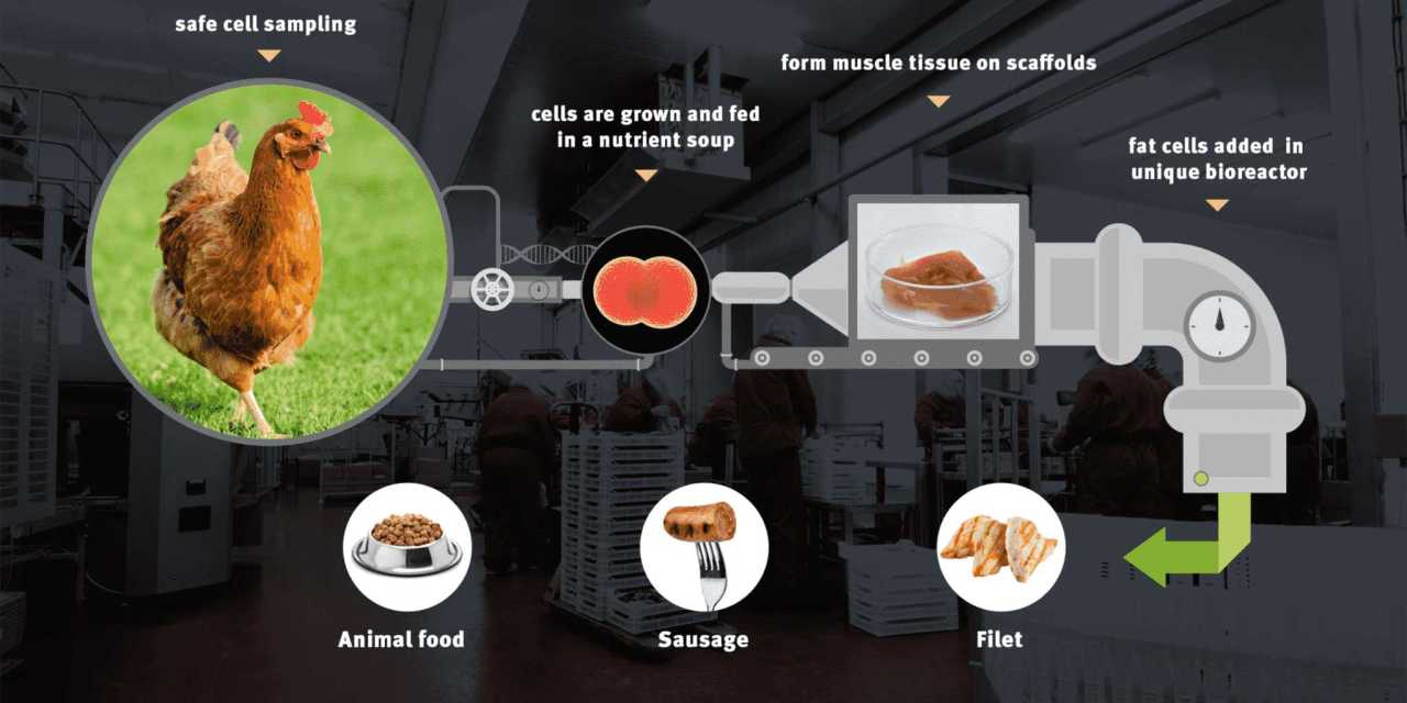 Could SuperMeat.com Change the World?