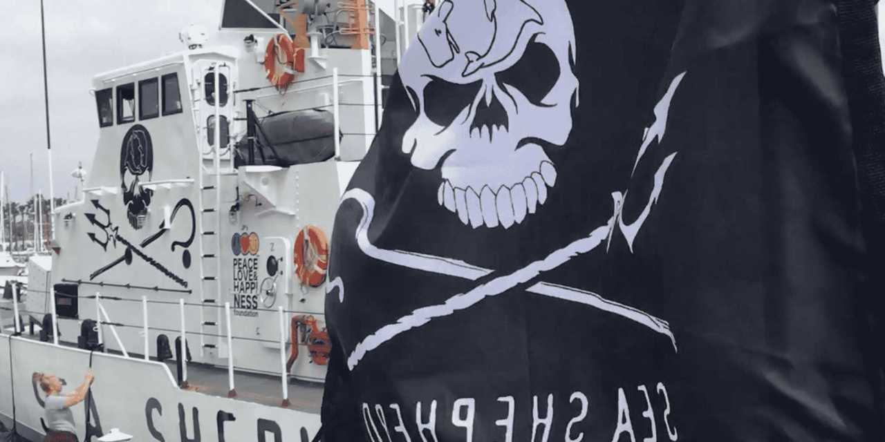 Sea Shepherd's Latest Victory for Whales