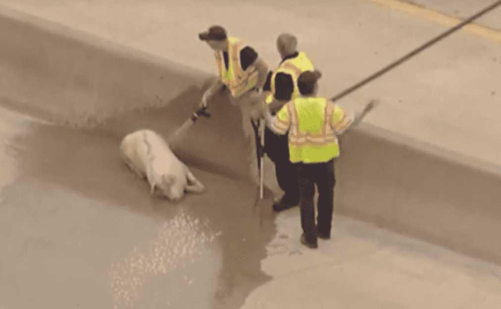 Dallas Animal Save 10
