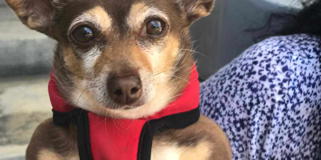 Tell California State Senators: YES on AB485, The Pet Rescue & Adoption Act!