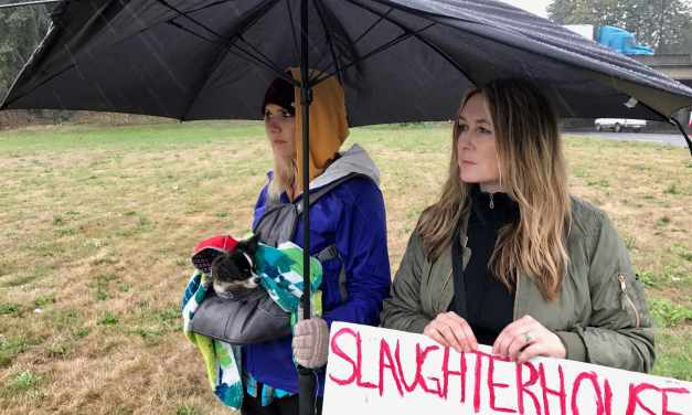 Portland Animal Save Folks Thwarted Trying To Bear Witness To Cows Headed To Slaughter!