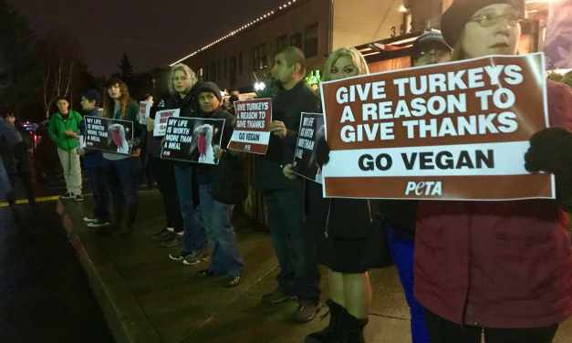 Animal Rights Activists Speak Out For Turkeys!