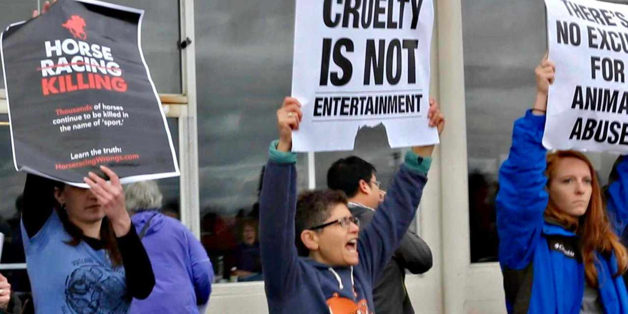 Tempers Flare At Horse Track Racing Protest!