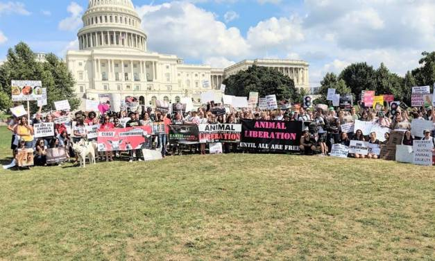 United We Stand! Official Animal Rights Marches Across the USA and the World!