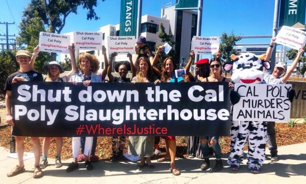 Students Protest Campus Slaughterhouse!