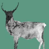 Taynish Stag August 2017 - Copy
