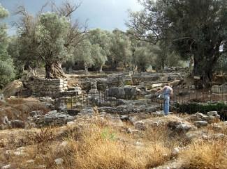 Some huge old olive trees amongst ruins at Elephtherna