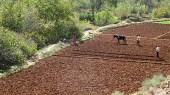 Farming in the fertile Todras region.