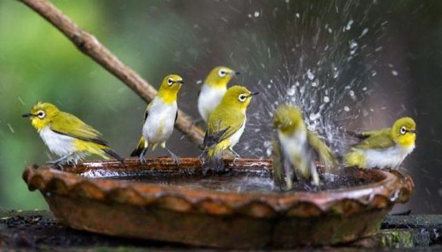 پرندوں کے لیے پانی اور باجرہ ڈالنا صدقہ ہے