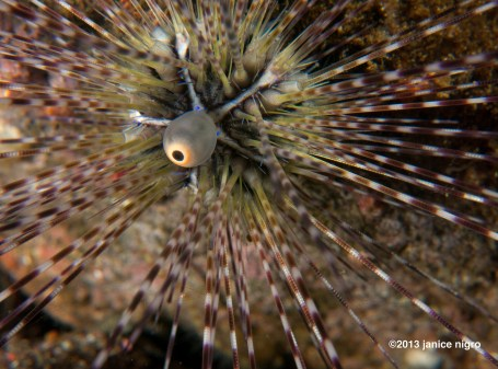 sea urchin abstract the bubble rotates in a circle. no idea what it is doing.