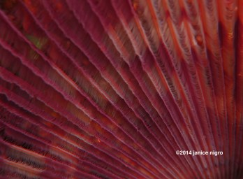 feather worm 7965 copyright
