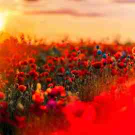 shallow focus photography of red and blue flowers
