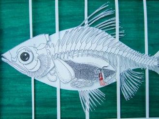 48 Fish closer_1
