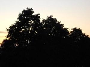 Trees in my neighbourhood