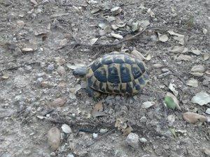 Schildkröte in der Plaine des Maures