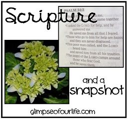 scriptureandsnapshot-from-Marcy