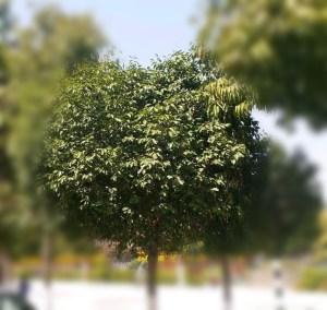 पेड़ करतें हैं हवा स्वच्छ