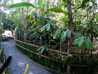 ...przez plantację kawy. Ale plantacja kawy, to nie to, czego się spodziewasz, czyli pole kawowych krzewów. To kilka drzewek, żeby pokazać ci, jak wyglądają liście...