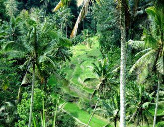 BALI – drugi kawałek Indonezji