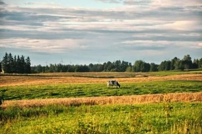 """""""Jesień idzie"""" - tak mawiała miejscowa ludność na początku naszych wakacji :&"""