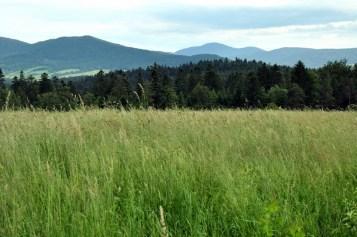 Trzygłowy Busov w tle, 1002m, najwyższy szczyt Niskiego, leży po słowackiej stronie.