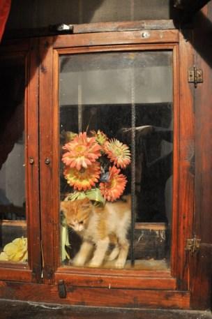 Kwiaty sztuczne, kot żywy. Roztańczony i cholernie uparty. Dobijał się całą noc i do rana nie pojął, że szyba to szyba :)