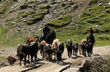 Pasterze spędzają czas, jak nie w jurtach, to na koniach.