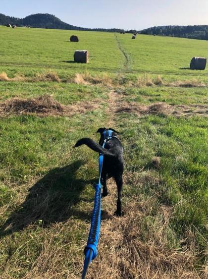 Ile można byczyć się na łąkach. Idziemy w góry. Do tego najfajniejsza rzecz: pies, który Cię ciągnie pod górę :)