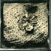 Seeshells, 6x6 cm, Hasselblad, 2013