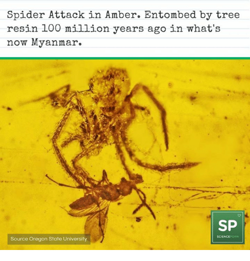 One day, a 100 million years ago … a Spider caught a Tick!