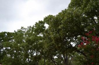 tree line (1280x853)