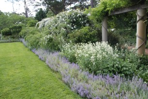 Catmint (Nepeta) makes a wonderful, very hardy edging plant