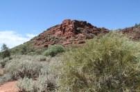 Wild Dog Hill Salt Bushes