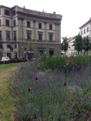 Mediterranean planting in the city streets of Florence