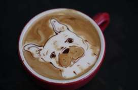 Cafe crema dog pic