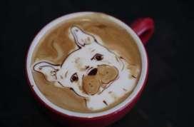 Cafe crema dog pic