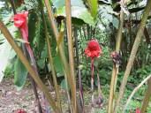 Finca La Isla flowers