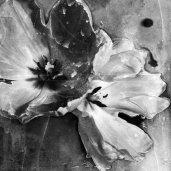 """Tulip I"" Still Lifes. Osheen Harruthoonyan."