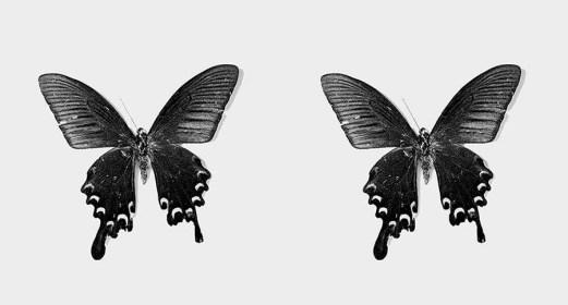 """""""Flutter"""" A Circle of Bluebirds. Osheen Harruthoonyan."""