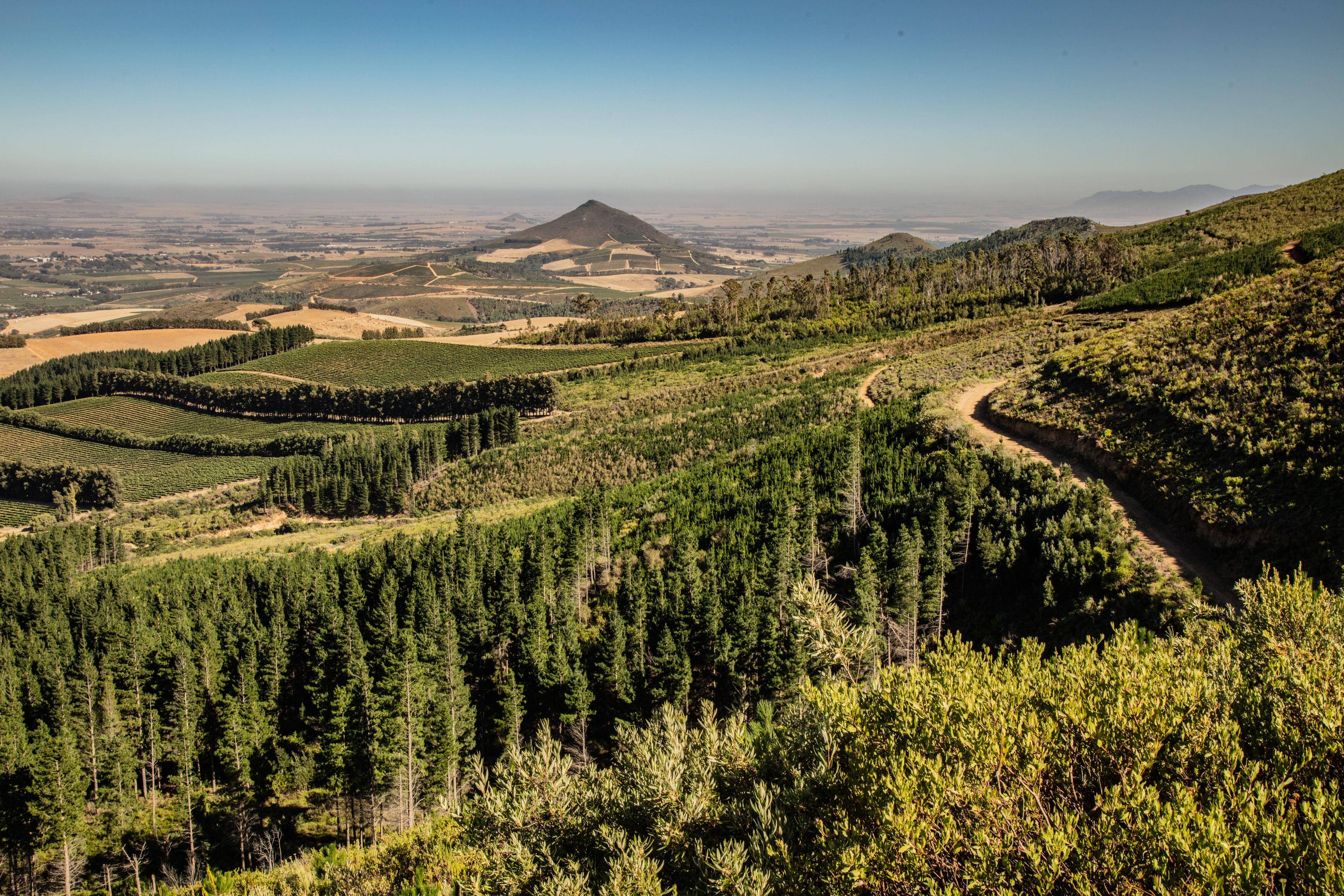 JAN | Jan Hendrik van der Westhuizen | The Heart of Stellenbosch