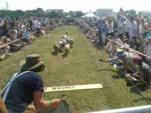 Pig Race 1